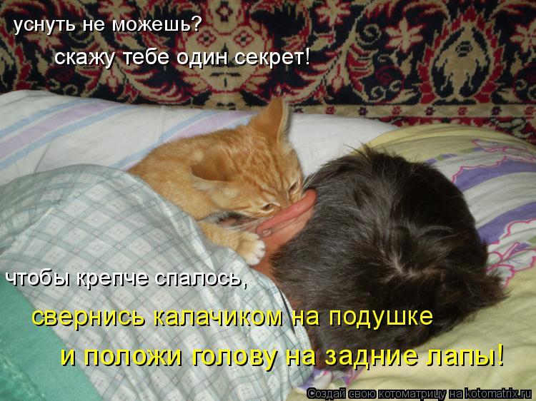 Котоматрица: уснуть не можешь? скажу тебе один секрет! чтобы крепче спалось, свернись калачиком на подушке и положи голову на задние лапы!