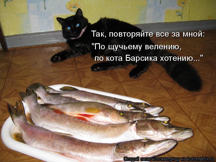 """Котоматрица: Так, повторяйте все за мной: """"По щучьему велению, по кота Барсика хотению..."""""""