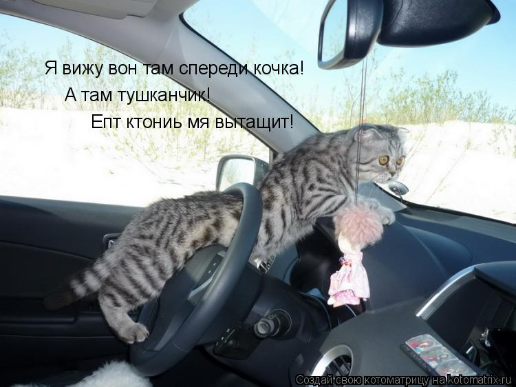 Котоматрица: Я вижу вон там спереди кочка! А там тушканчик! Епт ктониь мя вытащит!