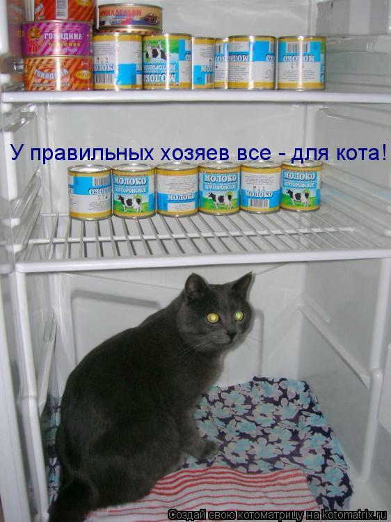 Котоматрица: У правильных хозяев все - для кота!