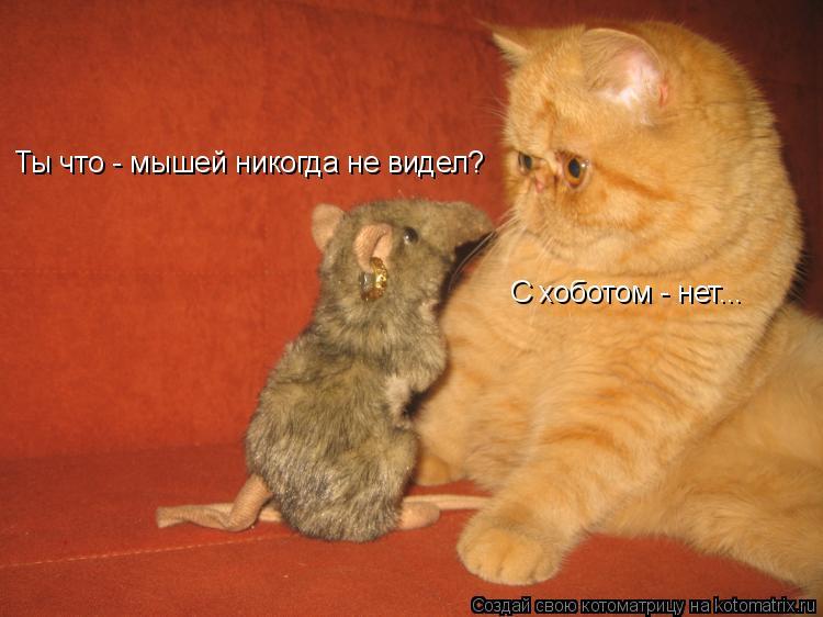 Котоматрица: Ты что - мышей никогда не видел? С хоботом - нет...