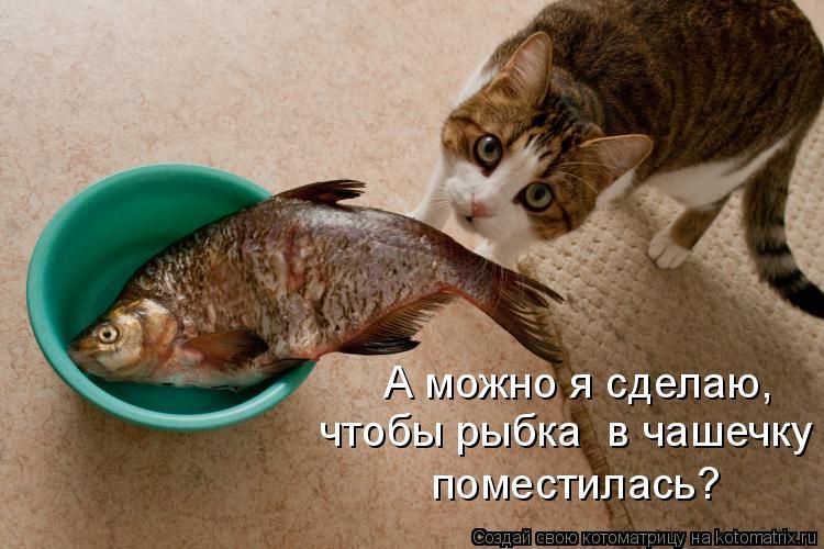 Котоматрица: А можно я сделаю,  чтобы рыбка  в чашечку поместилась?