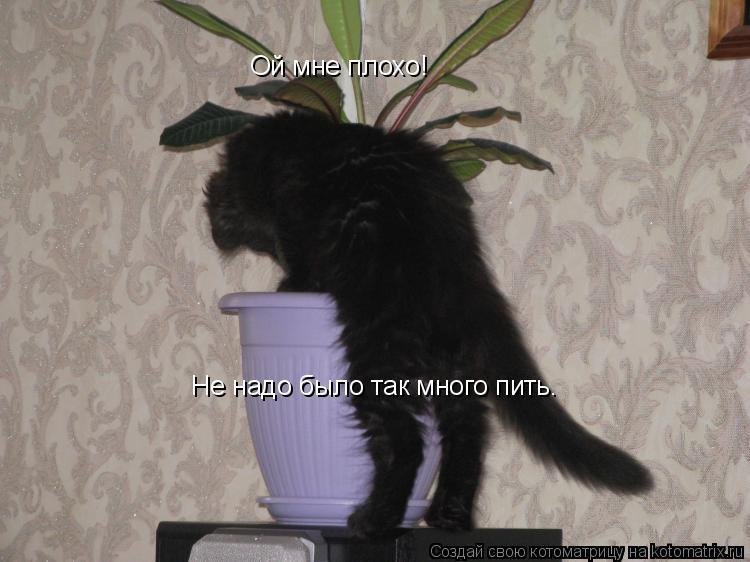 Котоматрица: Ой мне плохо! Не надо было так много пить.