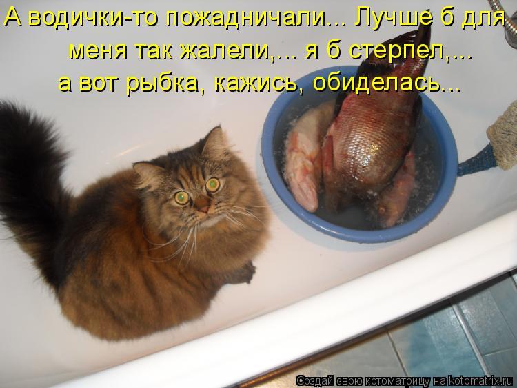 Котоматрица: А водички-то пожадничали... Лучше б для  меня так жалели,... я б стерпел,...  а вот рыбка, кажись, обиделась...