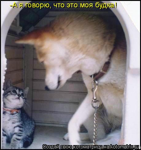 Котоматрица: -А я говорю, что это моя будка!