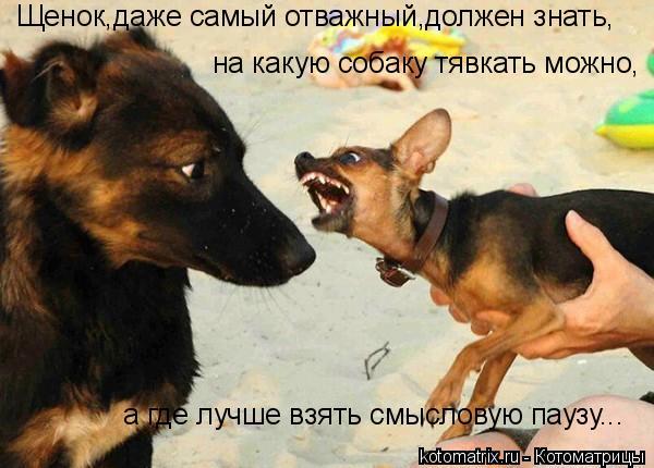 Котоматрица: Щенок,даже самый отважный,должен знать, на какую собаку тявкать можно, а где лучше взять смысловую паузу...