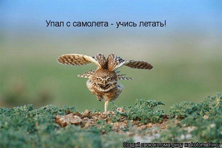 Котоматрица: Упал с самолета - учись летать!