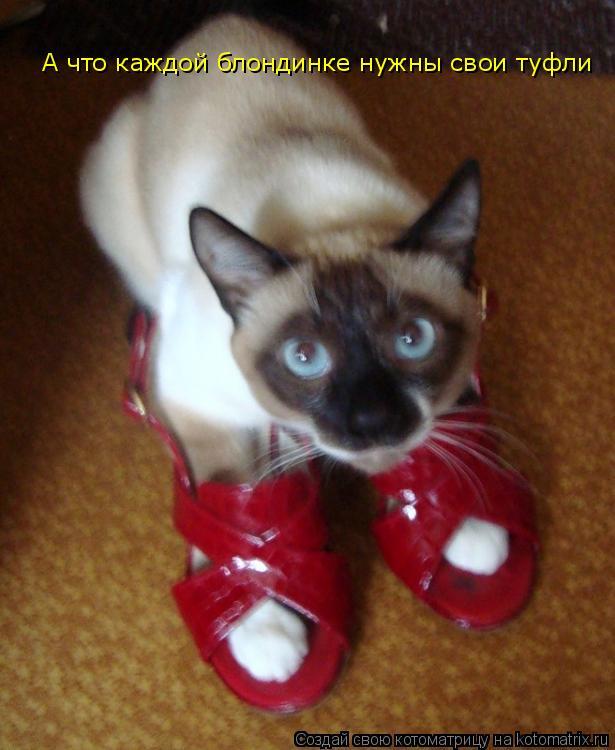Котоматрица: А что каждой блондинке нужны свои туфли