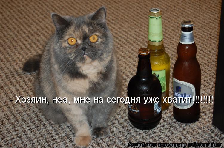 Котоматрица: - Хозяин, неа, мне на сегодня уже хватит!!!!!!!!