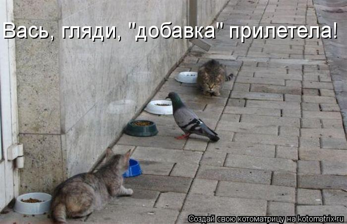 "Котоматрица: Вась, гляди, ""добавка"" прилетела!"