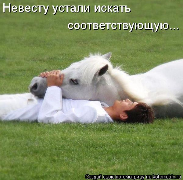 Котоматрица: Невесту устали искать  соответствующую...