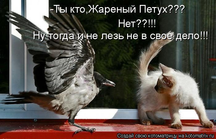 Котоматрица: -Ты кто,Жареный Петух??? Нет??!!! Ну тогда и не лезь не в свое дело!!!