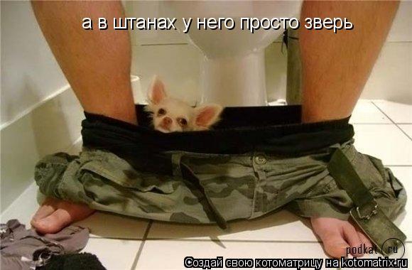 Котоматрица: а в штанах у него просто зверь