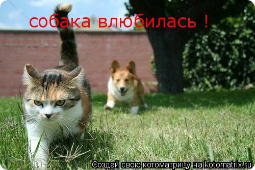 Котоматрица: собака влюбилась !