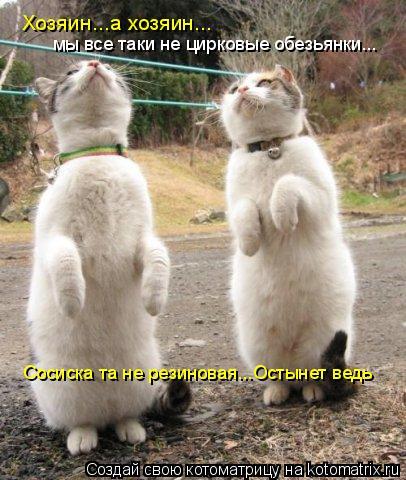 Котоматрица: сосиска та не резиновая Хозяин...а хозяин... мы все таки не цирковые обезьянки... Сосиска та не резиновая...Остынет ведь