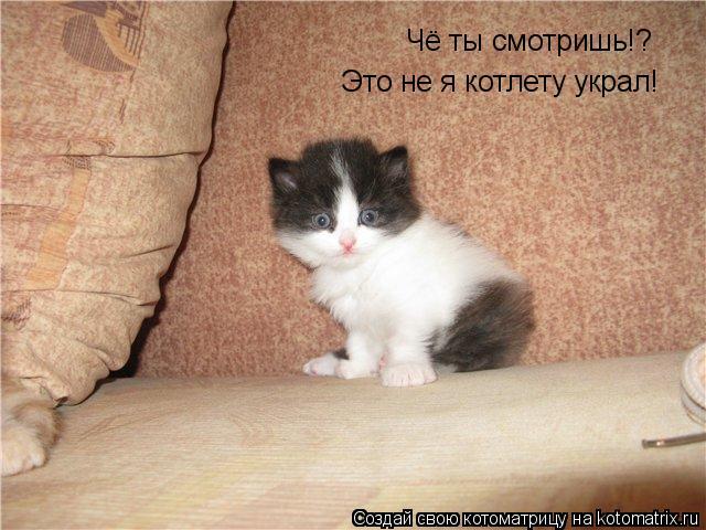 Котоматрица: Чё ты смотришь!?  Это не я котлету украл!