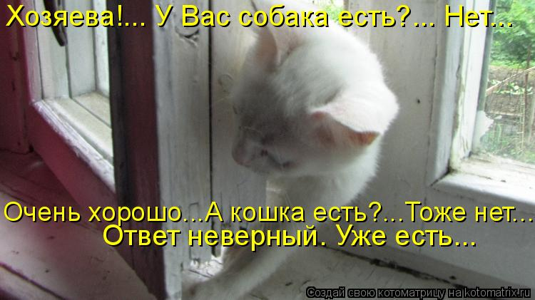 Котоматрица: Хозяева!... У Вас собака есть?... Нет...  Очень хорошо...А кошка есть?...Тоже нет...  Ответ неверный. Уже есть...