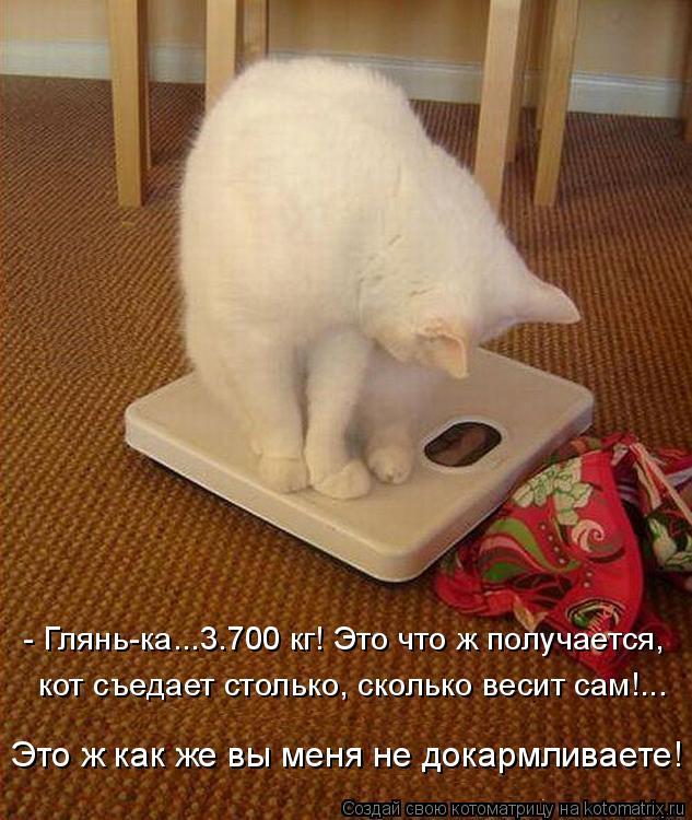 Котоматрица: - Глянь-ка...3.700 кг! Это что ж получается, кот съедает столько, сколько весит сам!... Это ж как же вы меня не докармливаете!