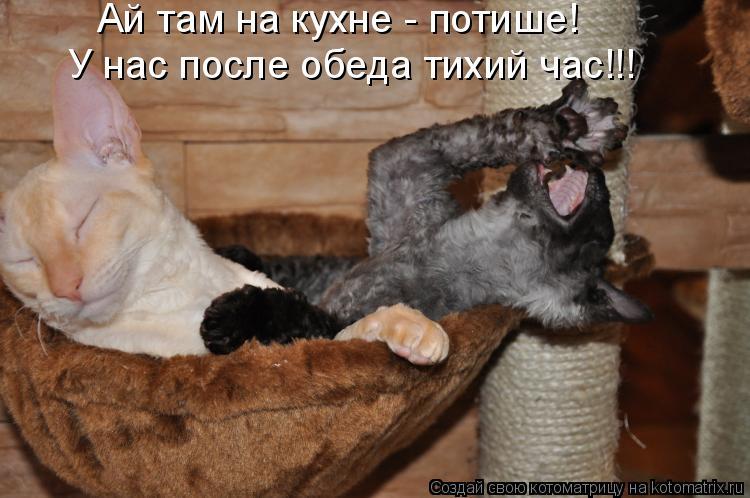 Котоматрица: Ай там на кухне - потише! У нас после обеда тихий час!!!