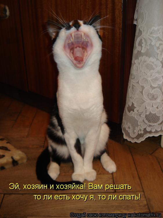 Котоматрица: Эй, хозяин и хозяйка! Вам решать то ли есть хочу я, то ли спать!