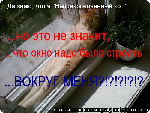 """Котоматрица: Да знаю, что я """"Неприкосеовенный кот""""! ...но это не значит, ...что окно надо было строить ...ВОКРУГ МЕНЯ?!?!?!?!?"""
