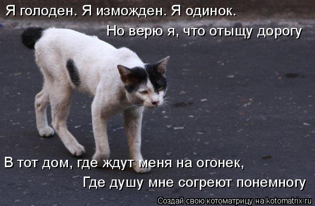 Котоматрица: Я голоден. Я изможден. Я одинок. Но верю я, что отыщу дорогу В тот дом, где ждут меня на огонек, Где душу мне согреют понемногу