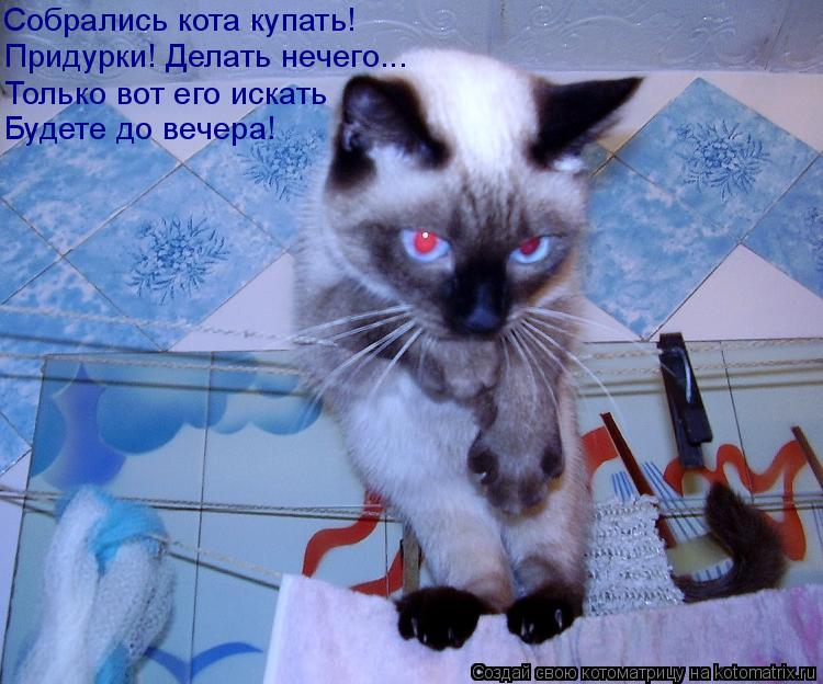 Котоматрица: Придурки! Делать нечего... Только вот его искать Будете до вечера! Собрались кота купать!