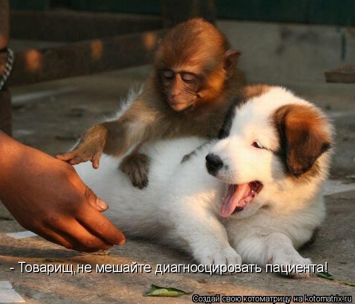 Котоматрица: - Товарищ,не мешайте диагносцировать пациента!