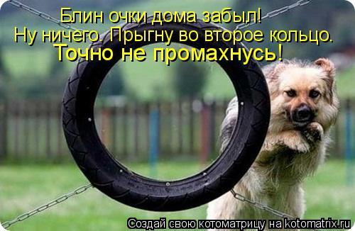 Котоматрица: Блин очки дома забыл! Ну ничего. Прыгну во второе кольцо. Точно не промахнусь!