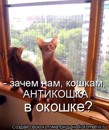 Котоматрица: - зачем нам, кошкам,  АНТИКОШКА  в окошке?