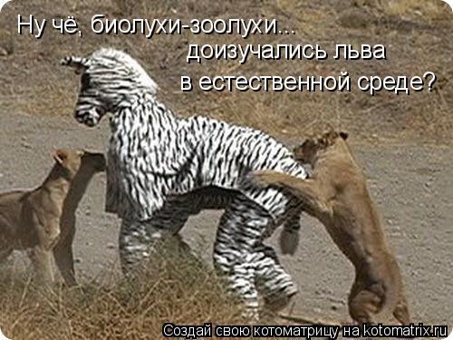 Котоматрица: Ну чё, биолухи-зоолухи... доизучались льва  в естественной среде?
