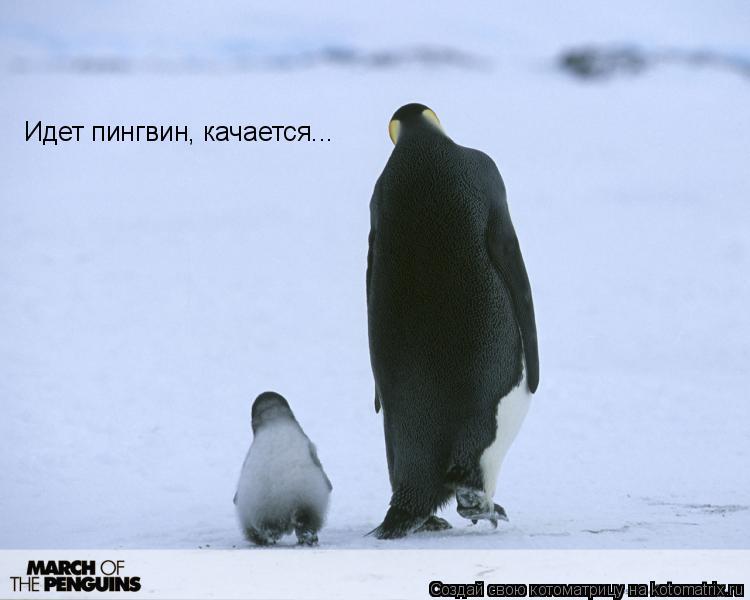 Котоматрица: Идет пингвин, качается...