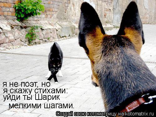 Котоматрица: я не поэт, но я скажу стихами: я не поэт, но  я скажу стихами: уйди ты Шарик мелкими шагами.