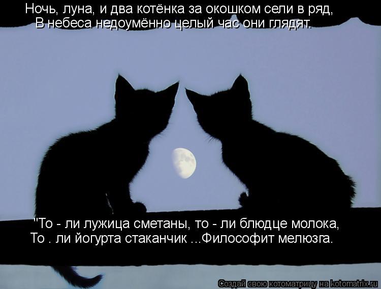 """Котоматрица: Ночь, луна, и два котёнка за окошком сели в ряд, В небеса недоумённо целый час они глядят. """"То - ли лужица сметаны, то - ли блюдце молока, То – ли"""