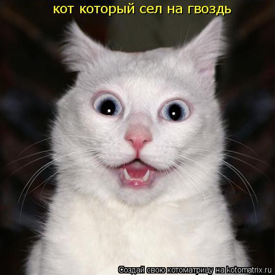 Котоматрица: кот который сел на гвоздь
