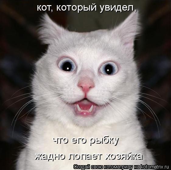 Котоматрица: кот, который увидел, что его рыбку жадно лопает хозяйка