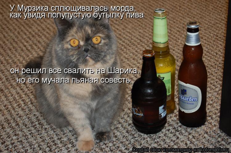 Котоматрица: У Мурзика сплющивалась морда, как увидя полупустую бутылку пива он решил все свалить на Шарика , но его мучала пьяная совесть.