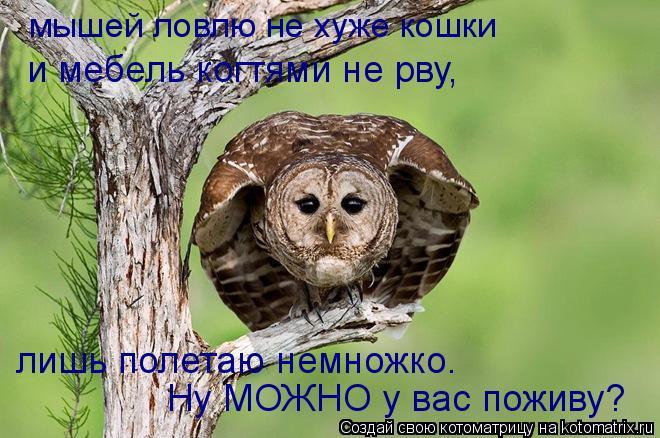 Котоматрица: мышей ловлю не хуже кошки и мебель когтями не рву, лишь полетаю немножко. Ну МОЖНО у вас поживу?