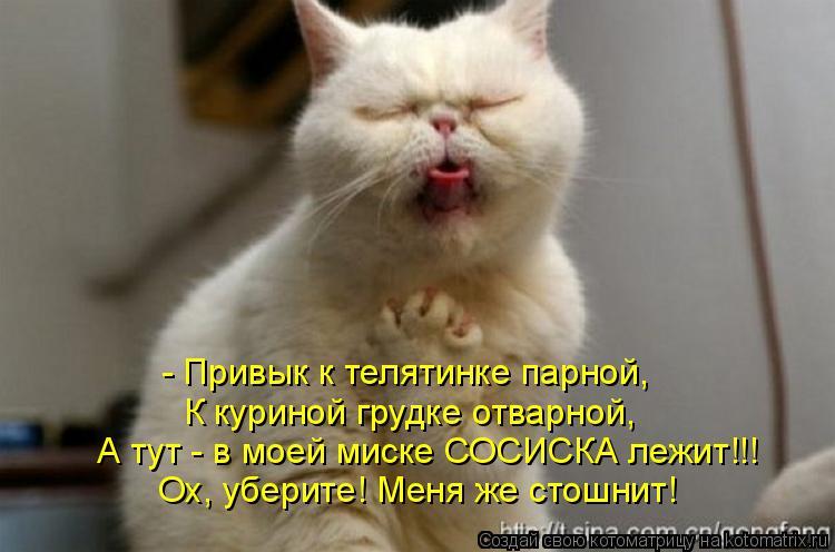 Котоматрица: - Привык к телятинке парной,  К куриной грудке отварной,  А тут - в моей миске СОСИСКА лежит!!! Ох, уберите! Меня же стошнит!