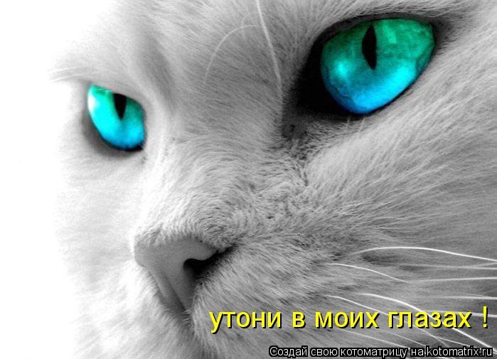 Котоматрица: утони в моих глазах !