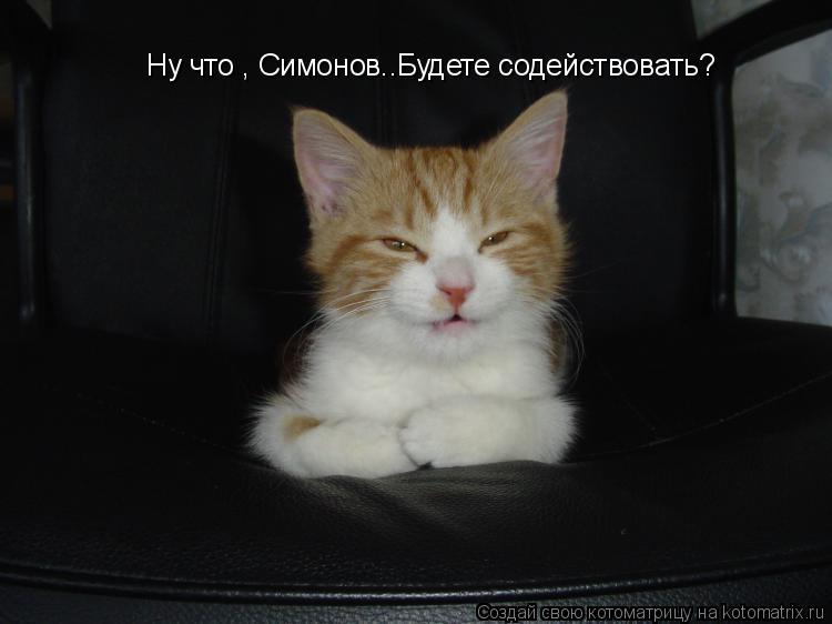 Котоматрица: Ну что , Симонов..Будете содействовать?
