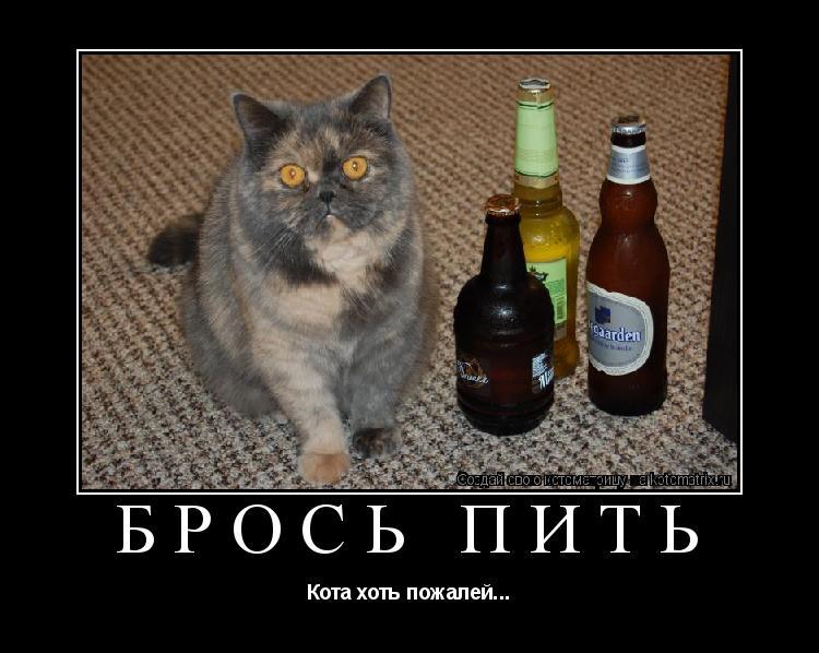 Котоматрица: БРОСЬ ПИТЬ Кота хоть пожалей...