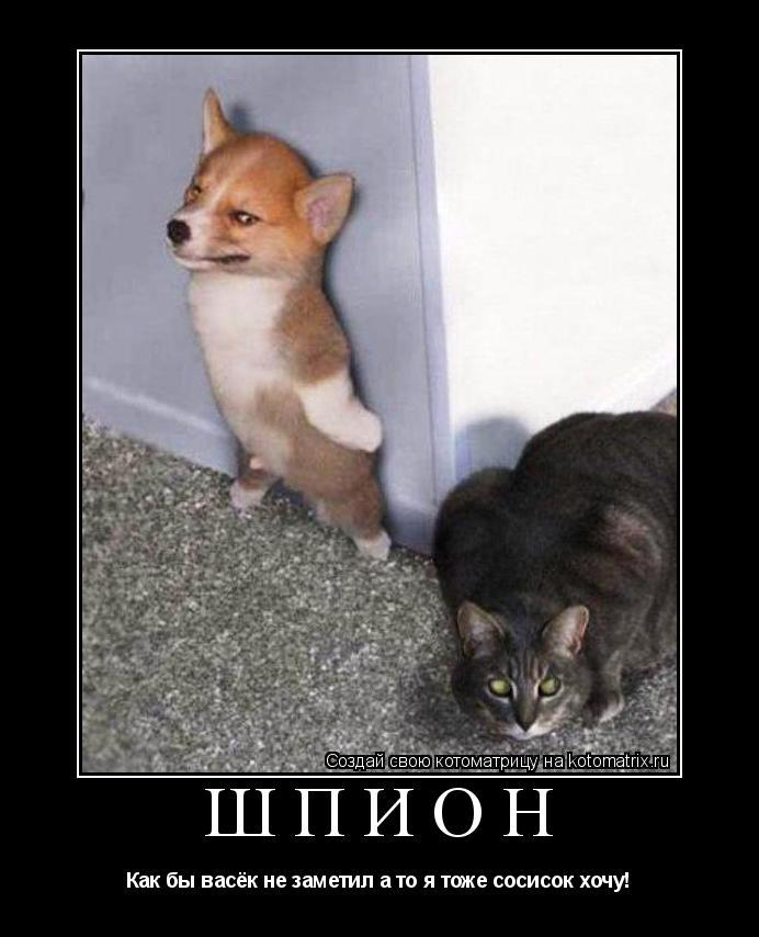 Котоматрица: Шпион Как бы васёк не заметил а то я тоже сосисок хочу!