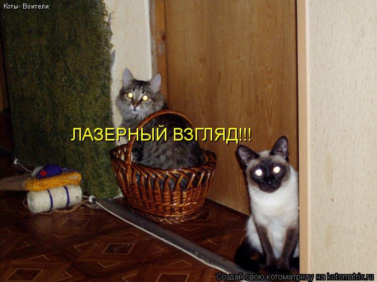 Котоматрица: Коты- Воители: ЛАЗЕРНЫЙ ВЗГЛЯД!!!