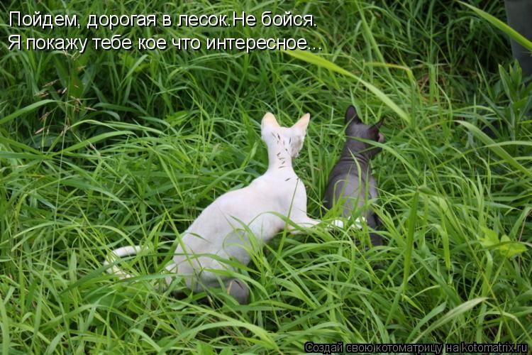 Котоматрица: Пойдем, дорогая в лесок.Не бойся. Я покажу тебе кое что интересное...