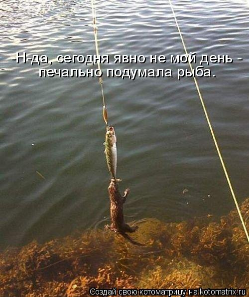 Котоматрица: -Н-да, сегодня явно не мой день -  печально подумала рыба.