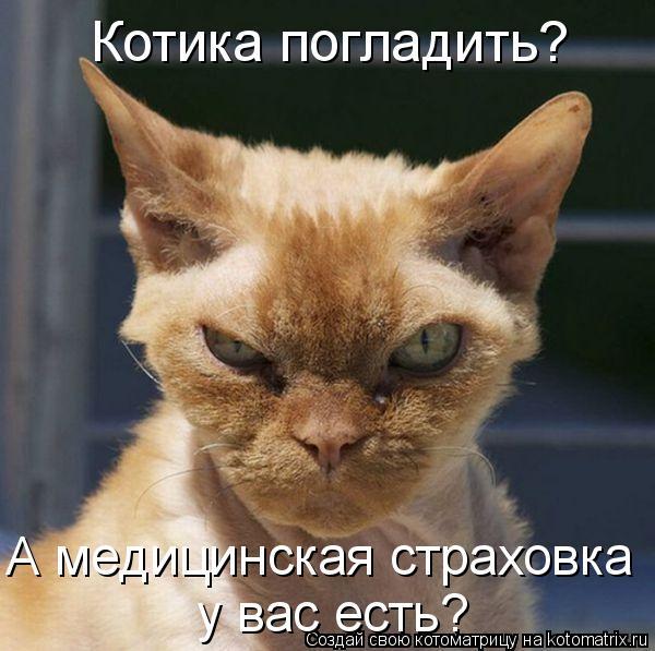 Котоматрица: Котика погладить?  А медицинская страховка  у вас есть?