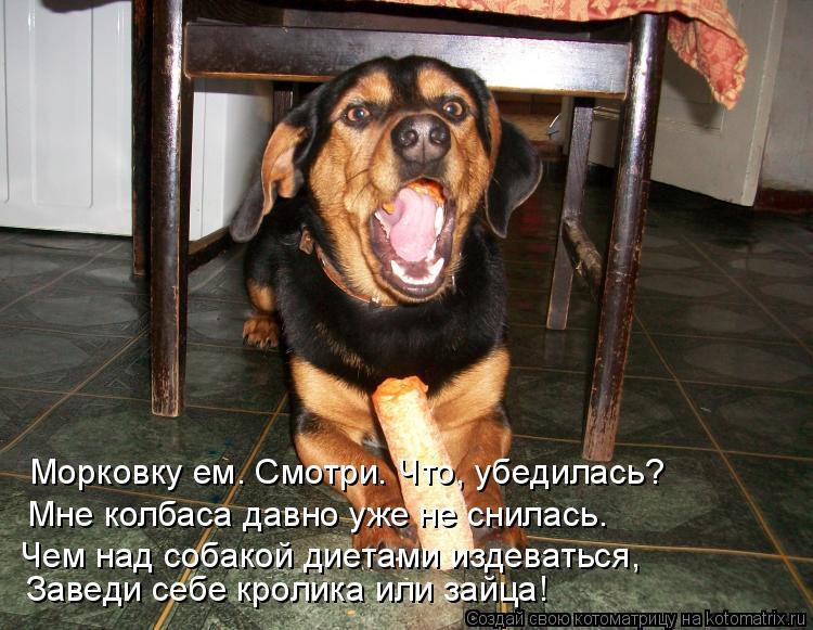 Котоматрица: Морковку ем. Смотри. Что, убедилась? Мне колбаса давно уже не снилась. Заведи себе кролика или зайца! Чем над собакой диетами издеваться,