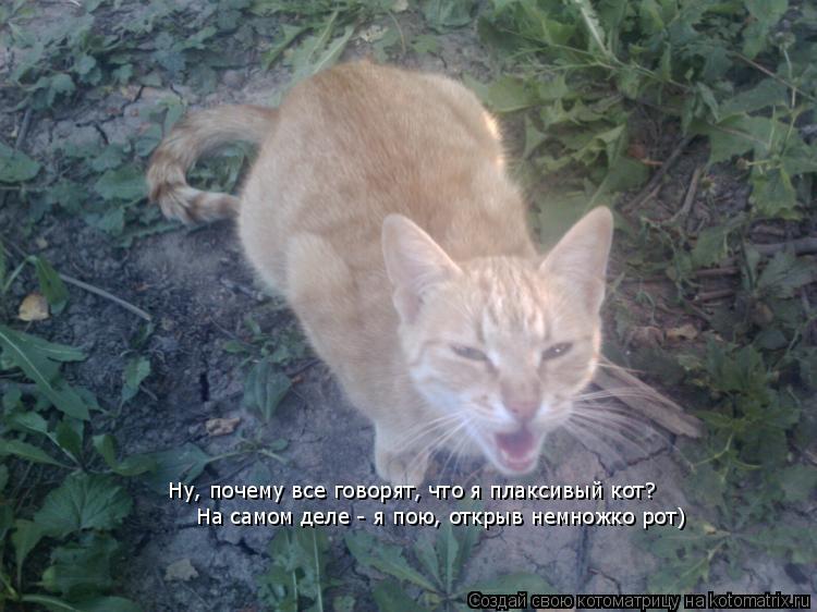 Котоматрица: Ну, почему все говорят, что я плаксивый кот?  На самом деле - я пою, открыв немножко рот)
