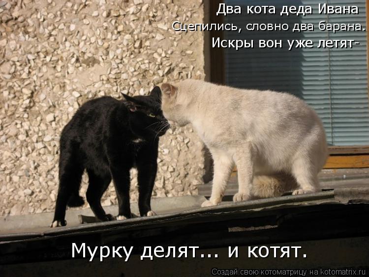 Котоматрица: Два кота деда Ивана Сцепились, словно два барана. Искры вон уже летят- Мурку делят... и котят.